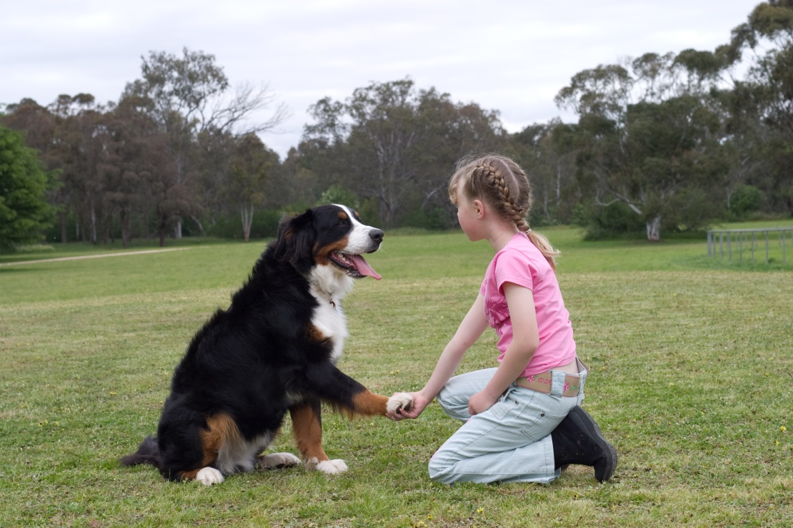 dạy chó bắt tay